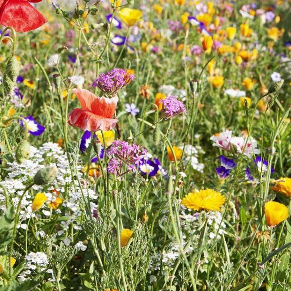 Prairie fleurit