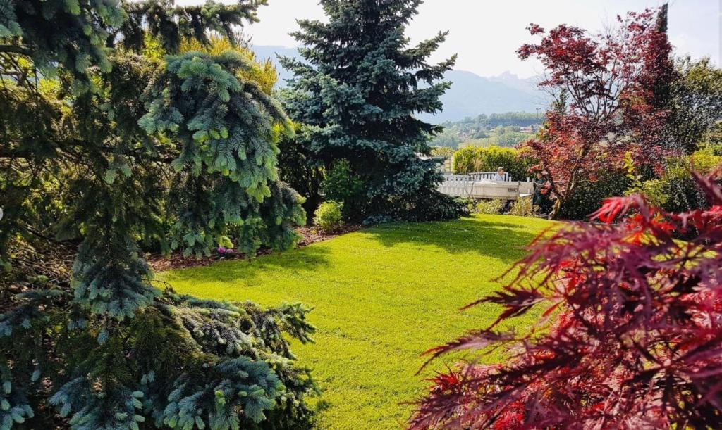 Gazon avec arbuste et conifère