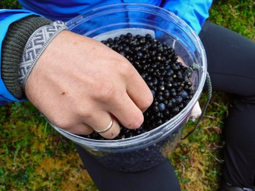 Arctic Valley Black Berries