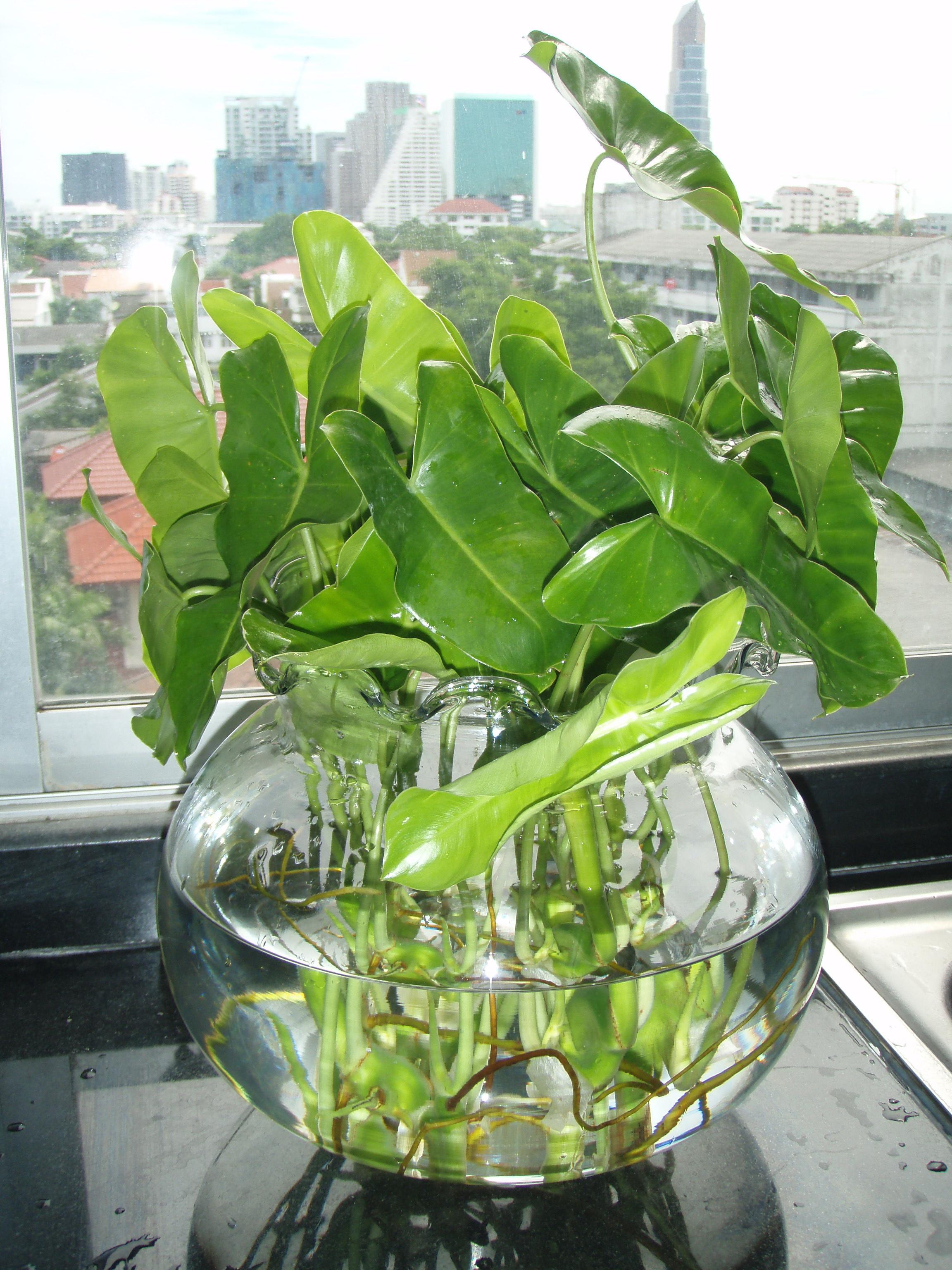 Best Kitchen Gallery: Garden Design Garden Design With Tropical Indoor Plants Slimnewedit of Tropical Foliage Houseplants on rachelxblog.com