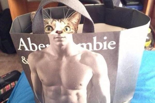A muscular kitty