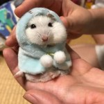 Super Cute Hamster
