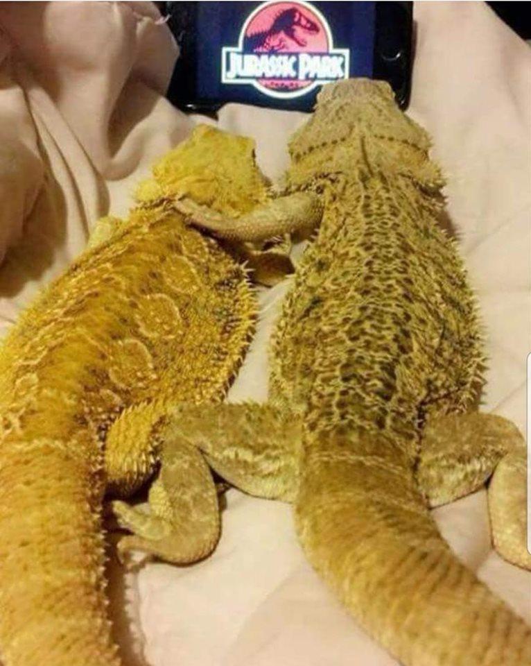 Horror movie for lizard