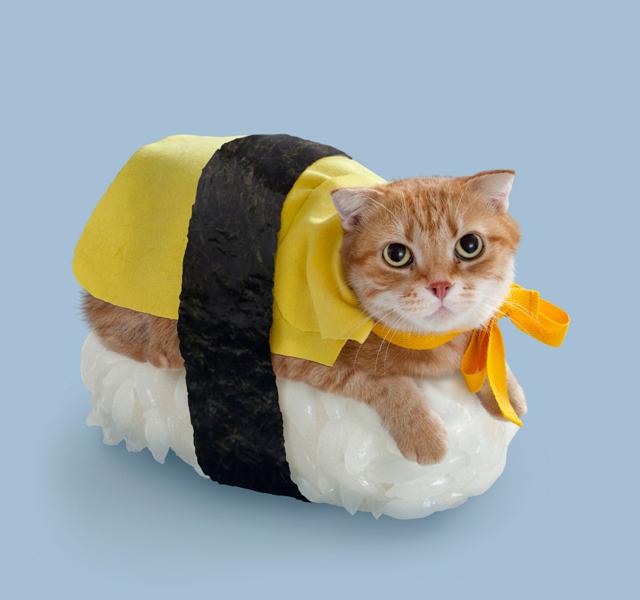 Sushi Cat Margo
