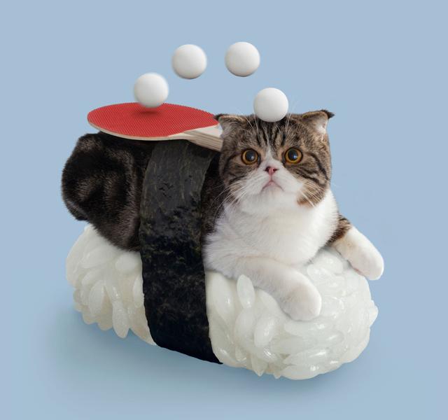 Sushi Cat Miyao