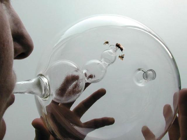 Susana Soares Trains abeilles pour détecter la maladie dans le souffle d'une personne