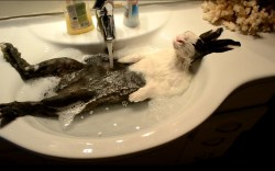 Muddy Malamute Hides In Plain Sight At Bath Time She is busy bringing up her little brother, marc, and has an intense relationship with her father, christian. muddy malamute hides in plain sight at
