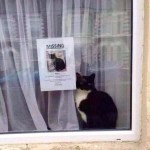 Missing Cat Found Sitting Next To Its Own Missing Cat Poster