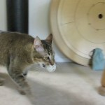 Creative Man Builds a Feline Feeding Machine That Requires His Cat to Hunt for His Dinner