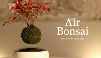 Ultra Small Bonsai Plants That Only Grow To Around An Inch High