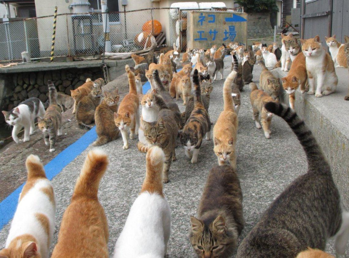 Image result for Cat Island, Japan