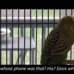 Disco the Parakeet Uses Every Phrase Available to Him in an Adorably Dissonant Rant