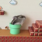 An Adorable Hamster Clears a Real-Life Super Mario Bros. Level