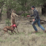 A Tall Man Stuns a Kangaroo With a Punch to the Nose to Rescue His Dog From a Deadly Headlock