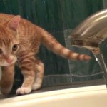 An Adorable Demonstration of How a Cat's Natural Instincts Are Perfectly Suited for a Career in Science