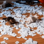 Ten Teeny Tiny Kittens Gleefully Romp Around In a Fabulous Pile of Torn Paper