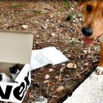 Gallant Dog Leads His Human to a Box of Abandoned Kittens Whom He Now Adores