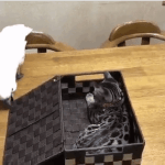 An Inquisitive Parrot Abruptly Shuts the Lid to a Box Containing an Unexpected Kitten Hiding Inside