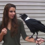 A Talking White-Necked Raven Refuses to Say 'Hello' But Is Happy to Say 'Hi'