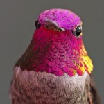 UCLA Assistant Researcher Bonds With Over 200 Hummingbirds Who Complain If Their Food Is Late