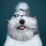 The Incredible Human-Like Expressiveness of Dogs in a Captured in a Wonderful Photo Series