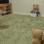 A Vocal Shiba Inu Dog Becomes Really Confused When One of Her Toys Starts Barking Back at Her