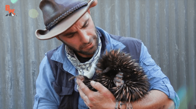 coyote-peterson-echidna Coyote Peterson Digs a Shy Echidna Out From the Floor to Give the Spiky Mammal a Excellent Cuddle Random