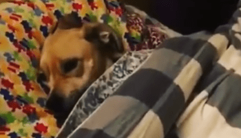Dog Sneezes In the Most Unusual Way