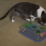 Clever Cost Saving Hacks That Provide Creative Alternatives to Expensive Cat and Dog Supplies