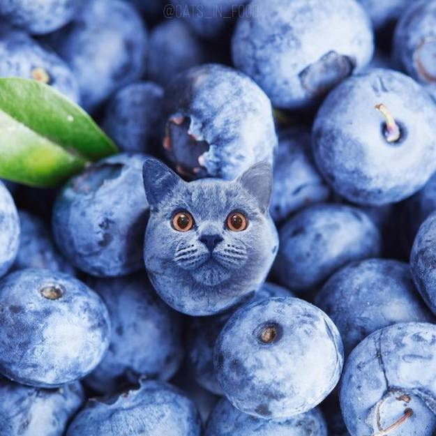 Cats-in-Food-Bluberry An Amusing Photo Series That Digitally Inserts Images of Tiny Cats Into Different Kinds of Foods Random