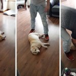 A Stubborn Dog Becomes Nearly Immovable While Playing Dead To Prevent His Humans From Leaving