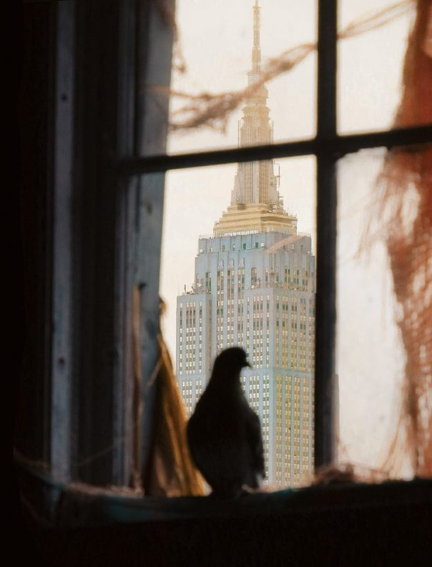 Pigeons-of-NYC-5-e1529432193525 A Delightful  Photo Book That Celebrates the Often Disregarded Beauty of New York City Pigeons Random