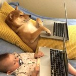 Baby Boy and His Beloved Dog Watch Netflix Alongside Each Other in Bed on Separate Laptops
