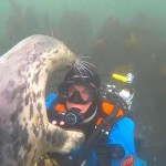 A Concerned Grey Seal Double Checks a Diver's Face Mask to Make Sure It's Securely Fastened