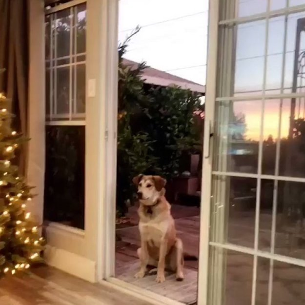 Dog-Thinks-Screen-Door-is-There12 A Silly Dog Waits Outside Until a Human Pretends to Open an Invisible Screen Door to Let Him In Random