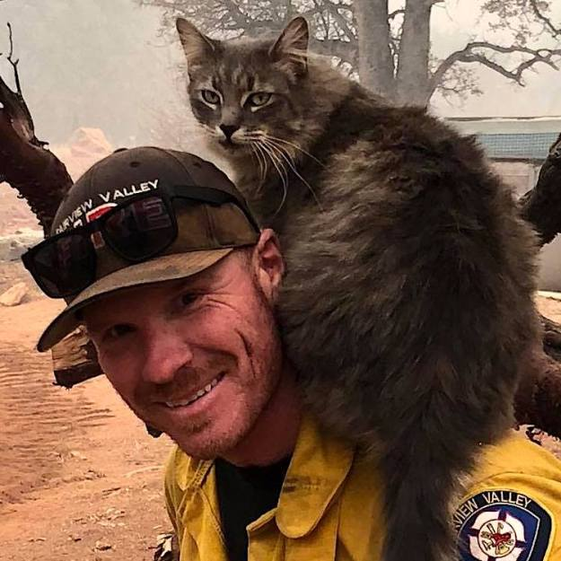 Firefighter-Cat-Paradise-California Cat Who Survived the Paradise, California Fire Rides Upon the Shoulders of the Firefighter Who Saved Him Random