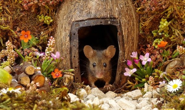 George-the-Mouse-in-His-House-Simon-Dell Thoughtful Photographer Builds Little Log Pile House for a Mouse Family to Help Keep Them Safe and Warm Random