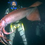 Irritated Humboldt Squid Bites a Persistent Nature Host