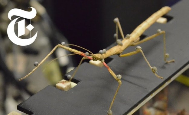 Walking-Stick The Fascinating Study of How Stick Insects Walk Random