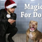 Magician Makes Treats Disappear In Front of Adoptable Dogs Who React in Really Adorable Ways