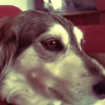 Man Autotunes His Rescued Dog's Persistent Whine