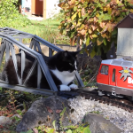 Courageous Cat Faces Off Against Oncoming Train