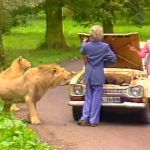 1987 Safari Park Safety Demo Uses Dummies to Show That Lions May Attack People Who Leave Their Car