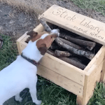 Craftsman Builds a Stick Library for Dogs at the Park