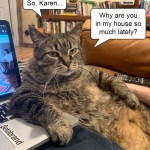 Cat Demands Answers