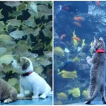 Puppies and Kittens From the Atlanta Humane Society Explore the Georgia Aquarium While It Is Closed