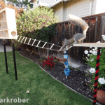 Former NASA Engineer Builds an Incredible Obstacle Course For the Squirrels That Are Stealing His Birdseed