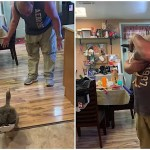 A Gregarious Pet Goose Gleefully Greets Her Human Whenever He Returns and Yells 'Daddy's Home'