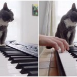 Cat Sitting on Keyboard Helps Play Van Halen's 'Jump'