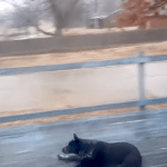 Dog Makes Graceful Exit Through Wooden Handrail After an Unexpected Slide Across a Slippery Porch